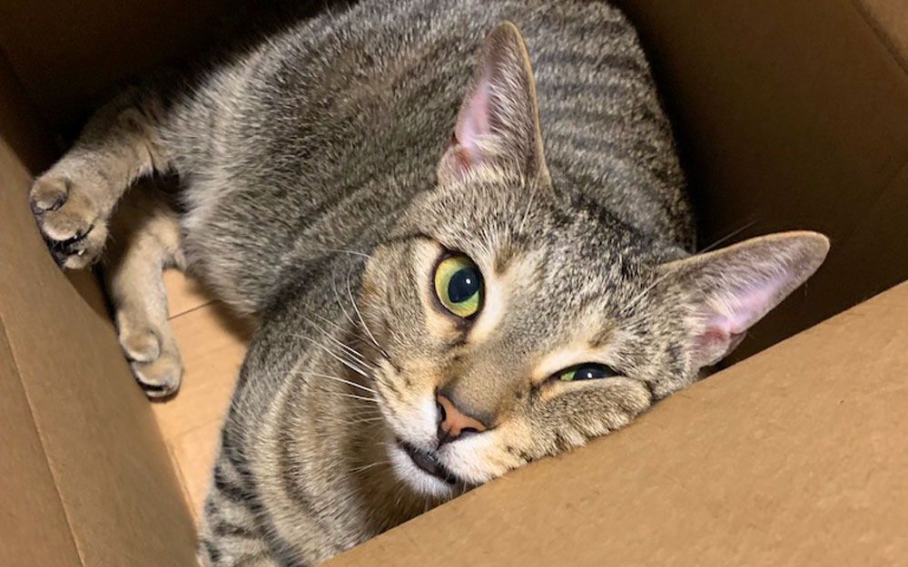 I'm going to share the pros and cons of owning a cat to help you decide if owning a cat is the right decision for your household.