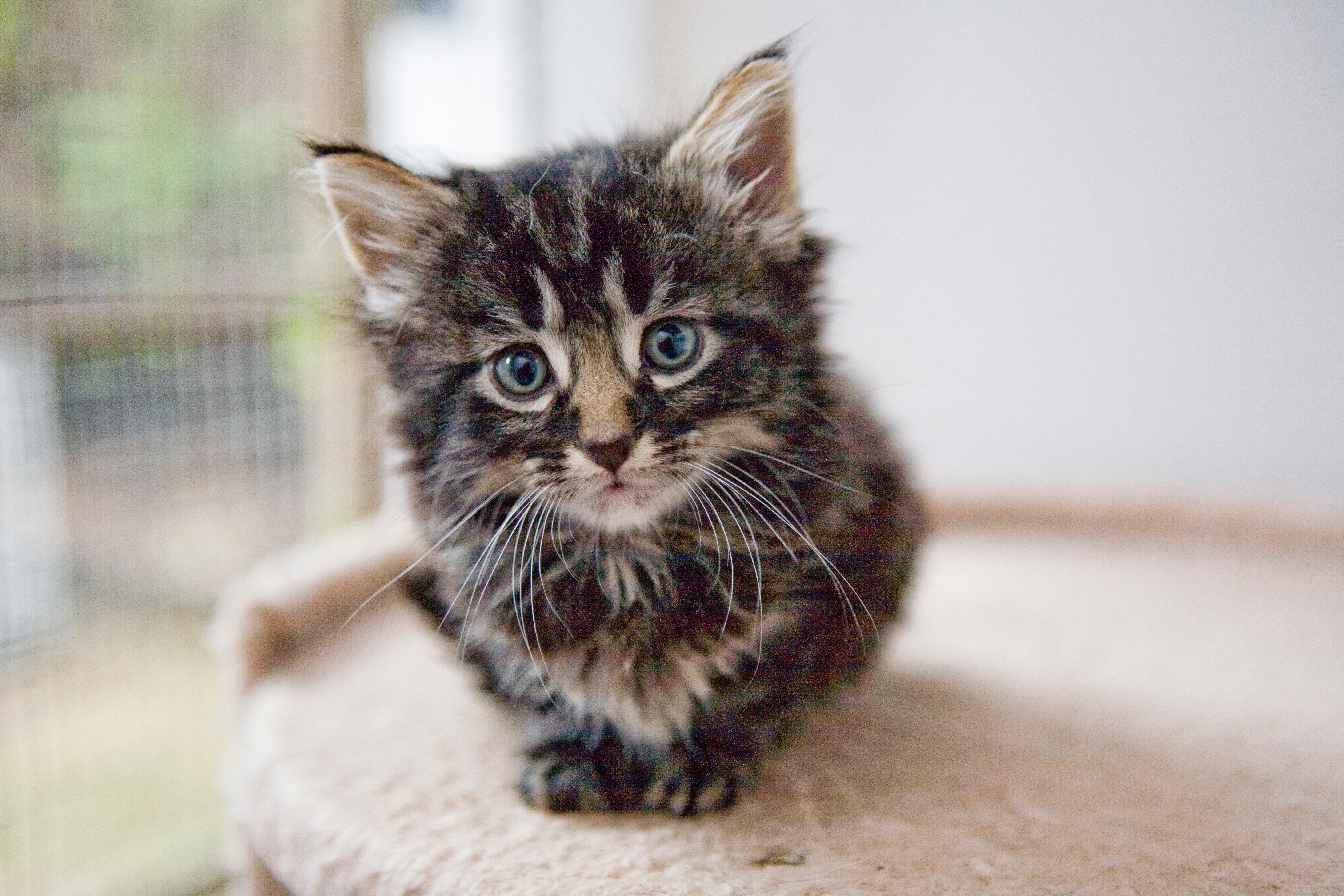 Beginners Tips on How to Take Care of Kittens