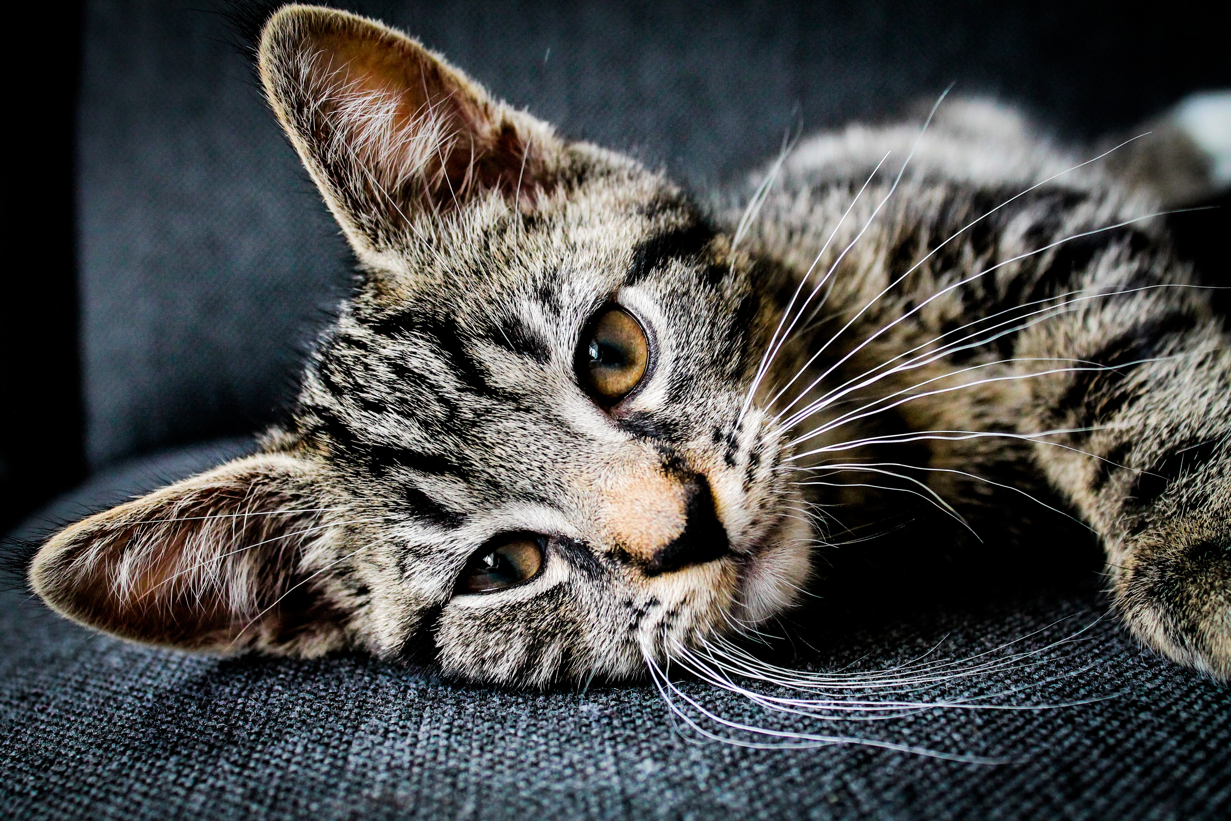 How to Get Rid of the Cat Smell in Your House