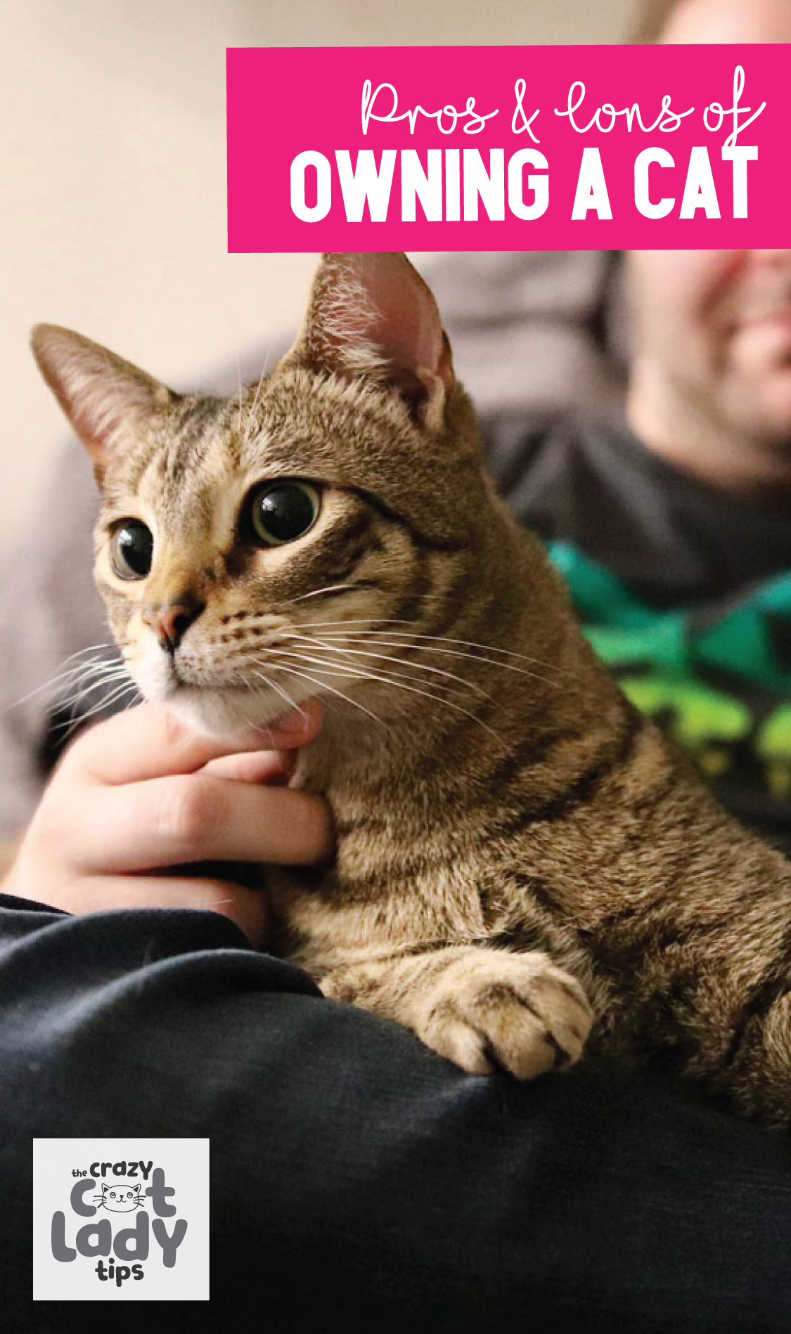 Sharing your home with a feline friend can have its disadvantages as well as advantages. Many people enjoy the companionship that a pet brings to their life, but when you own a cat the idea of companionship brings on a whole new meaning.