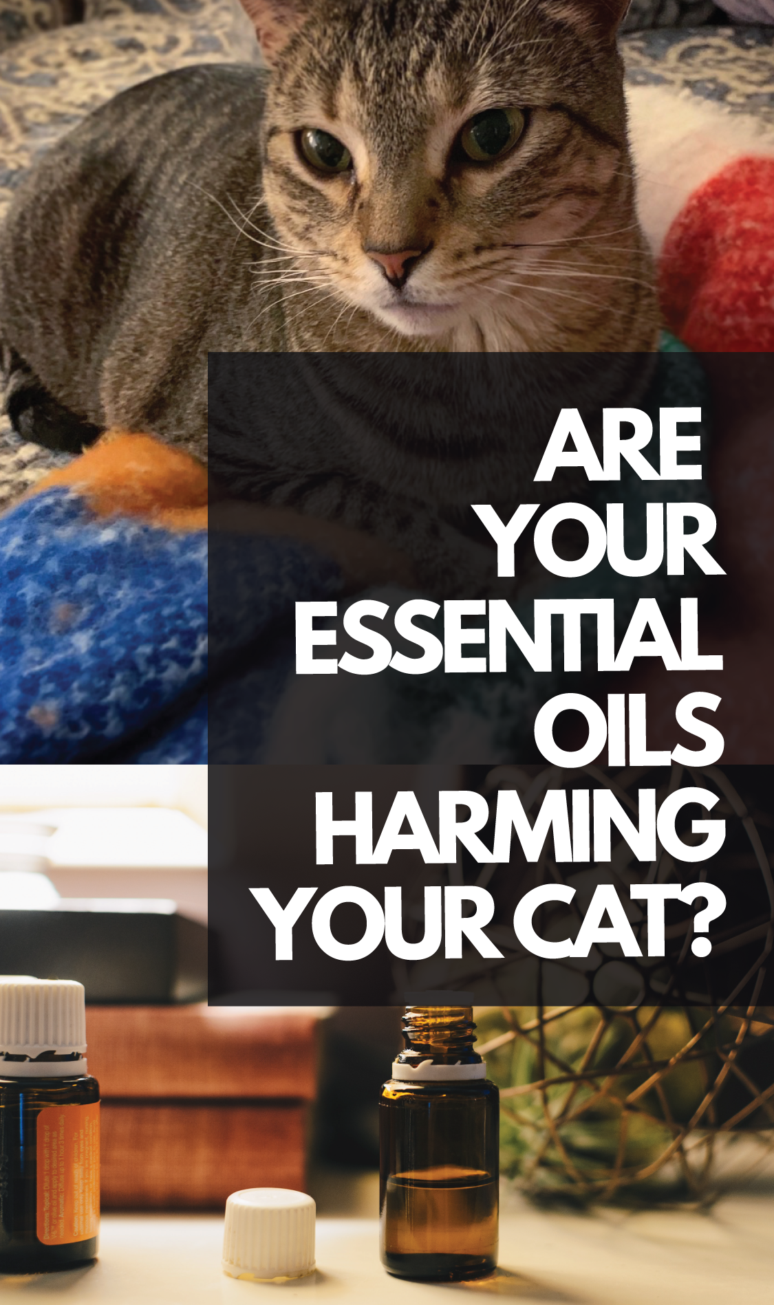 Essential oils are highly concentrated, and this is where the largest issue lies. Cats don't produce the correct liver enzymes to break down the concentration of essential oils. This means that essential oils, even in the smallest amounts, will build up in their system and poison them.