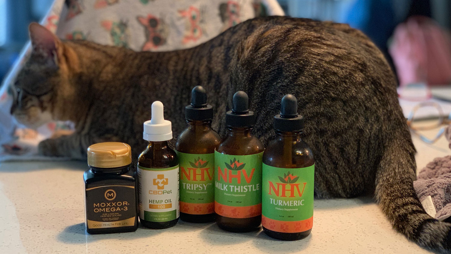 Homeopathic Treatments I Give My Cat with Kidney Failure