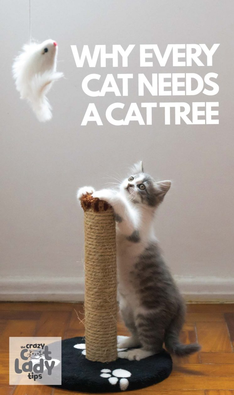 Cat trees can help satisfy a multitude of cat needs such as climbing, scratching, stimulation, and a high perch where they can escape to.