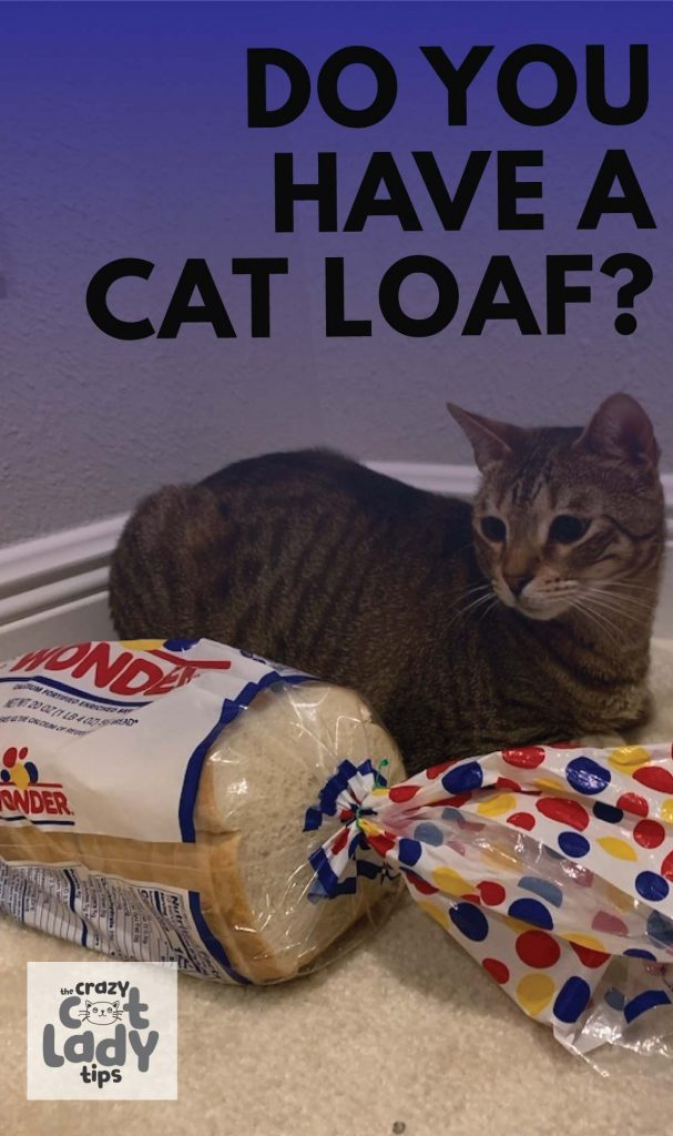 Do you have a cat loaf at home?