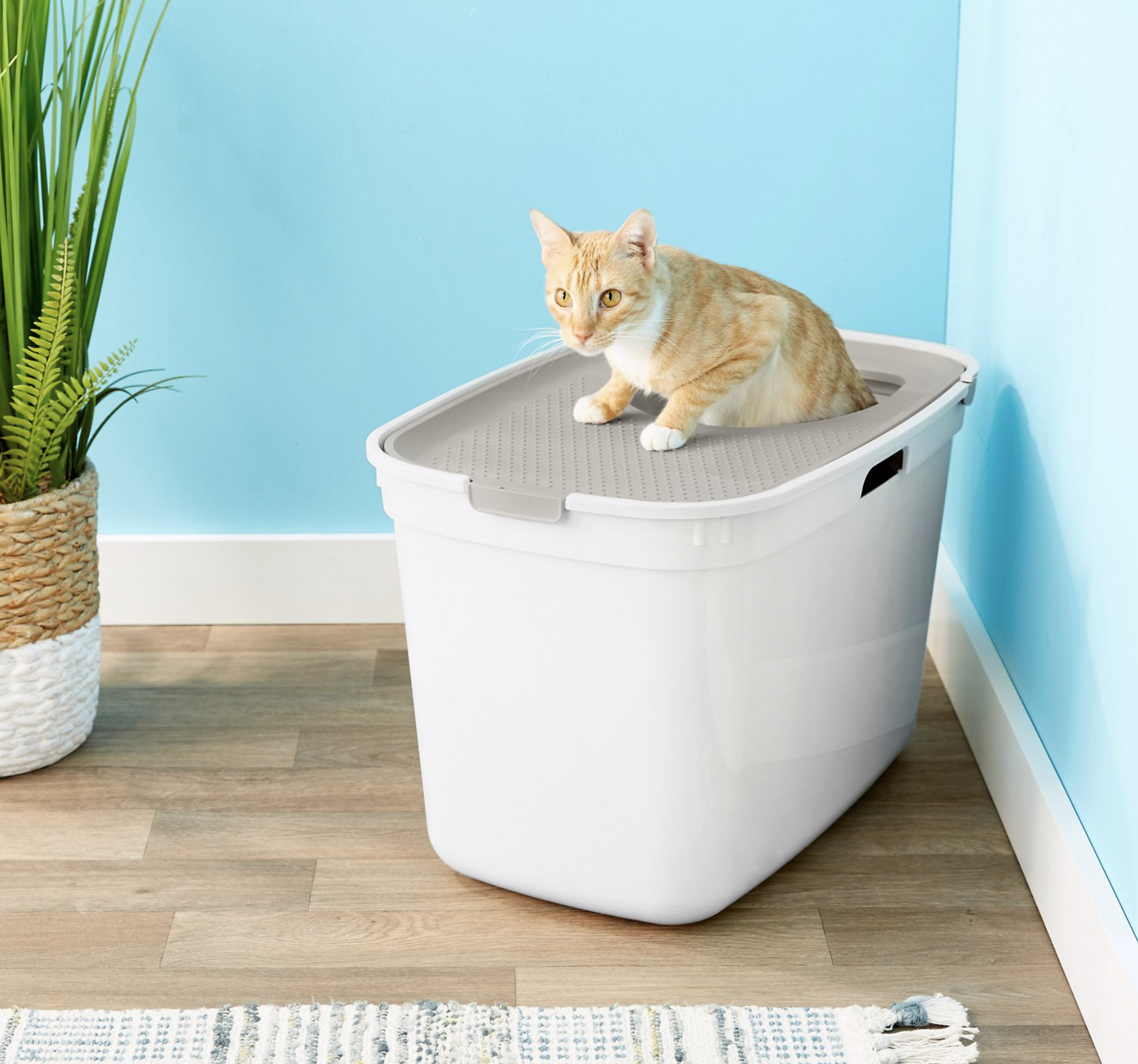 Best Top Entry Litter Box for Cats