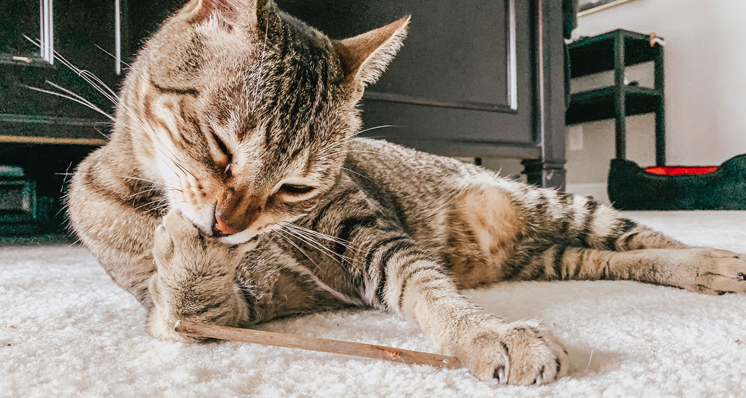 Silvervine Sticks for Cats the Ultimate Cat Chew Toy